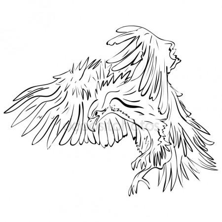 Flying Raven Drawing