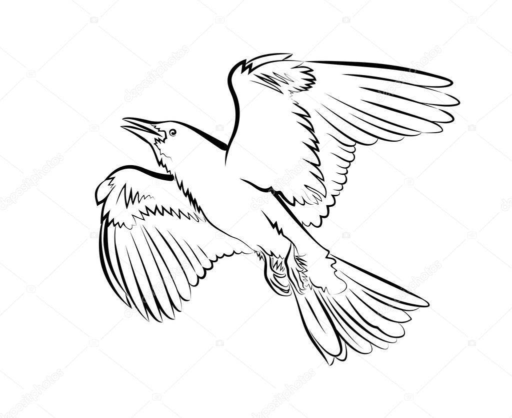 1024x835 Flying Bird On A White Background Stock Vector Alexcosmos