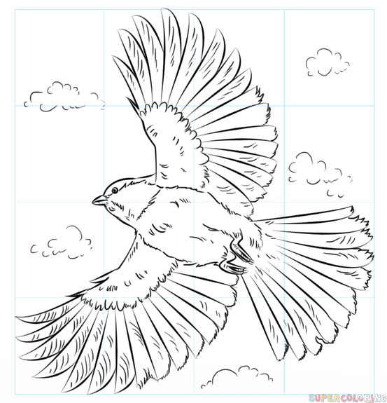 553x575 How To Draw A Chickadee In Flight Step By Step Drawing Tutorials