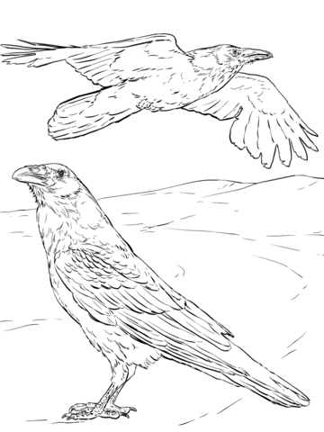 360x480 Common Raven Coloring Page Free Printable Coloring Pages