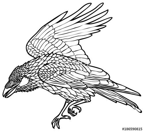 500x459 Vector Illustration Of Walking Raven Black And White Stock Image