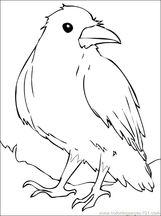 560x750 Crow Coloring Pictures Horror Scenes Crow Printable Coloring Page