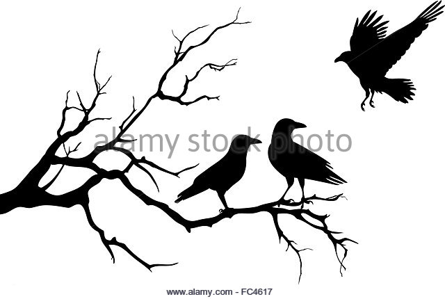 640x430 Crow Flying Stock Vector Images