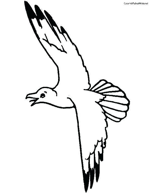 612x767 Seagull Coloring Page Pages For
