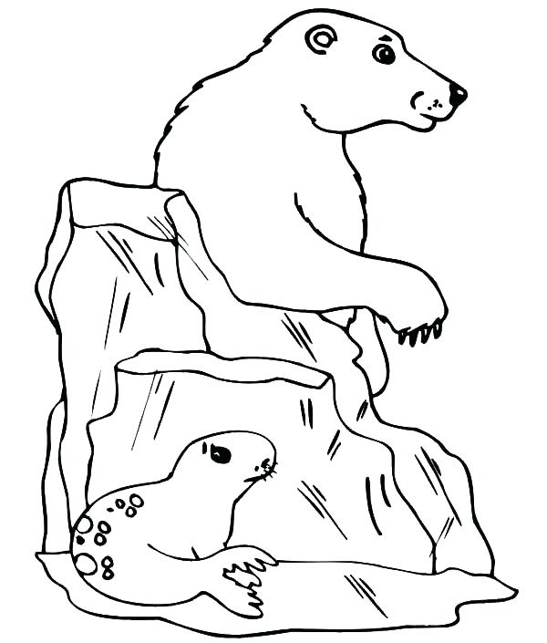 600x705 Seagull Coloring Page Seagull Hide From Polar Bear Behind Iceberg