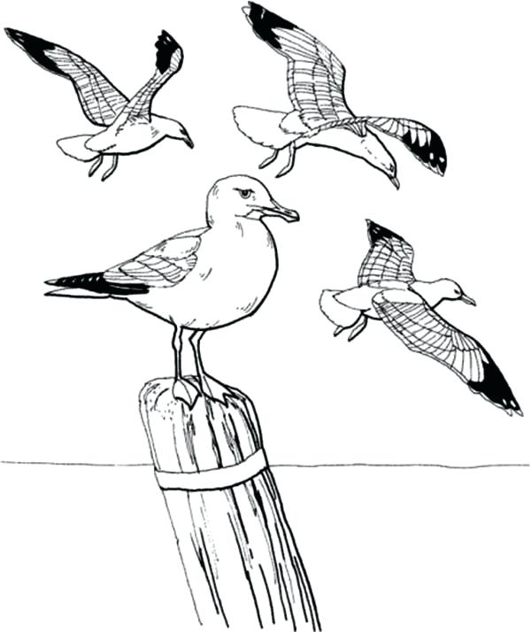 600x714 Seagull Coloring Page Seagulls Flying