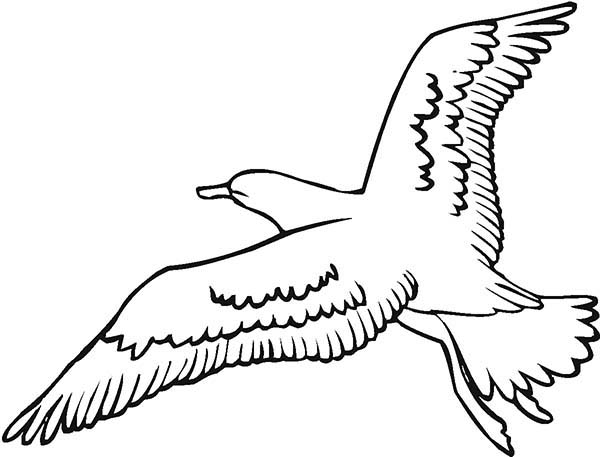 seagull in flight coloring pages - photo#6