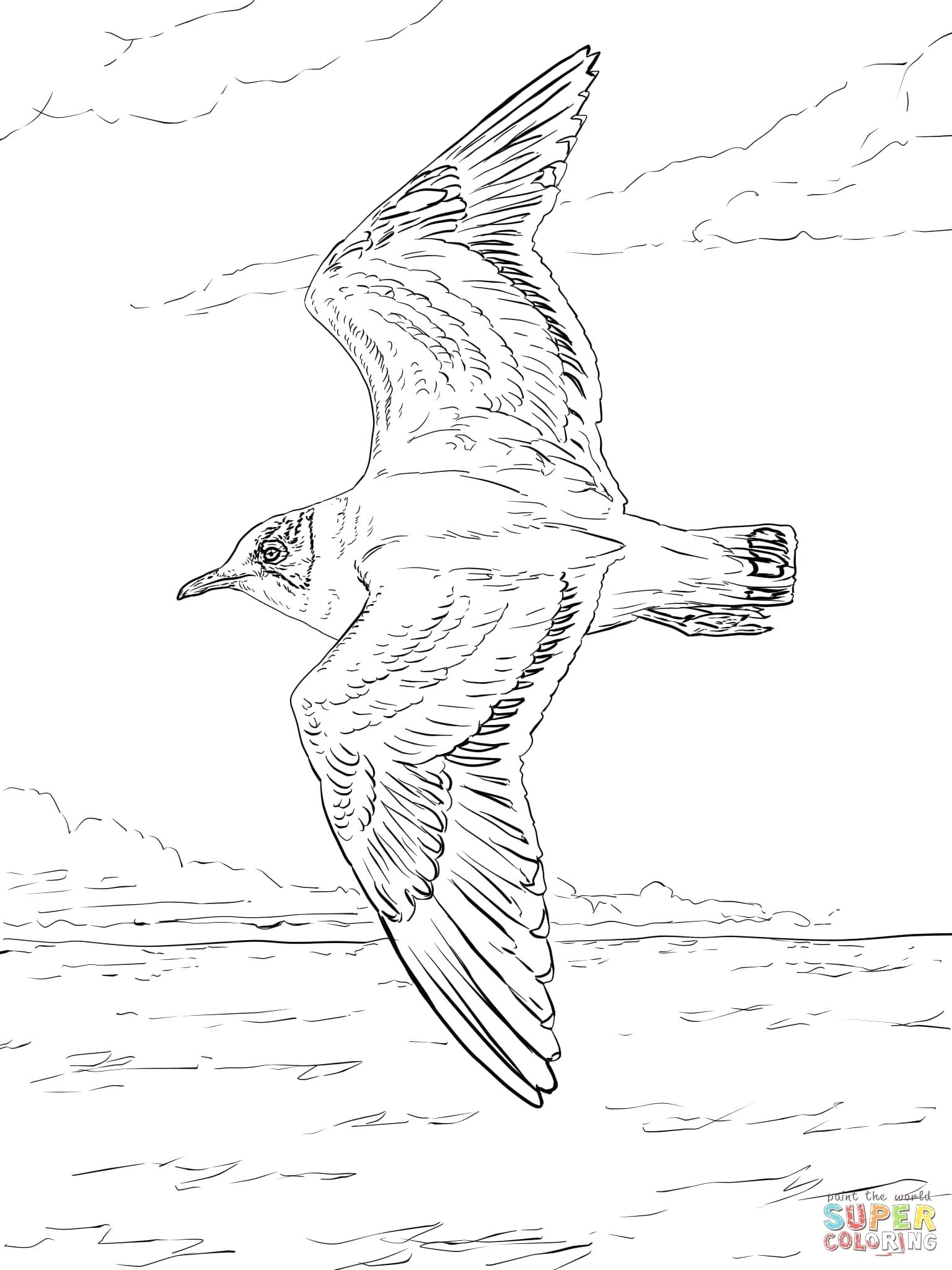 seagull in flight coloring pages - photo#13