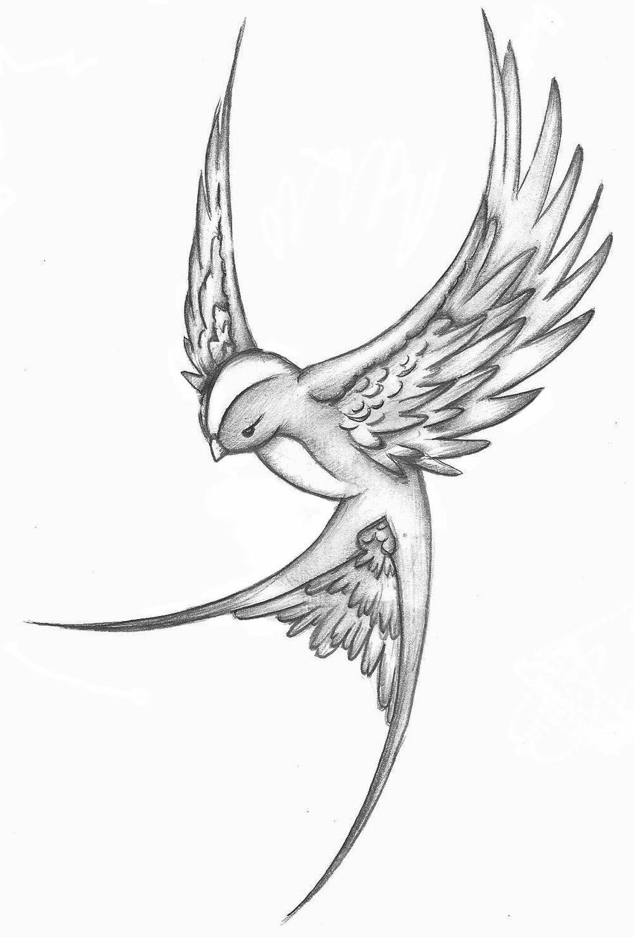 Flying Sparrow Drawing