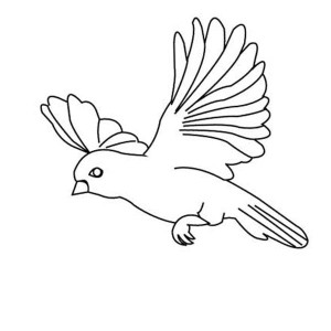 300x300 Drawing A Little Cute Bird Coloring Page Drawing A Little Cute