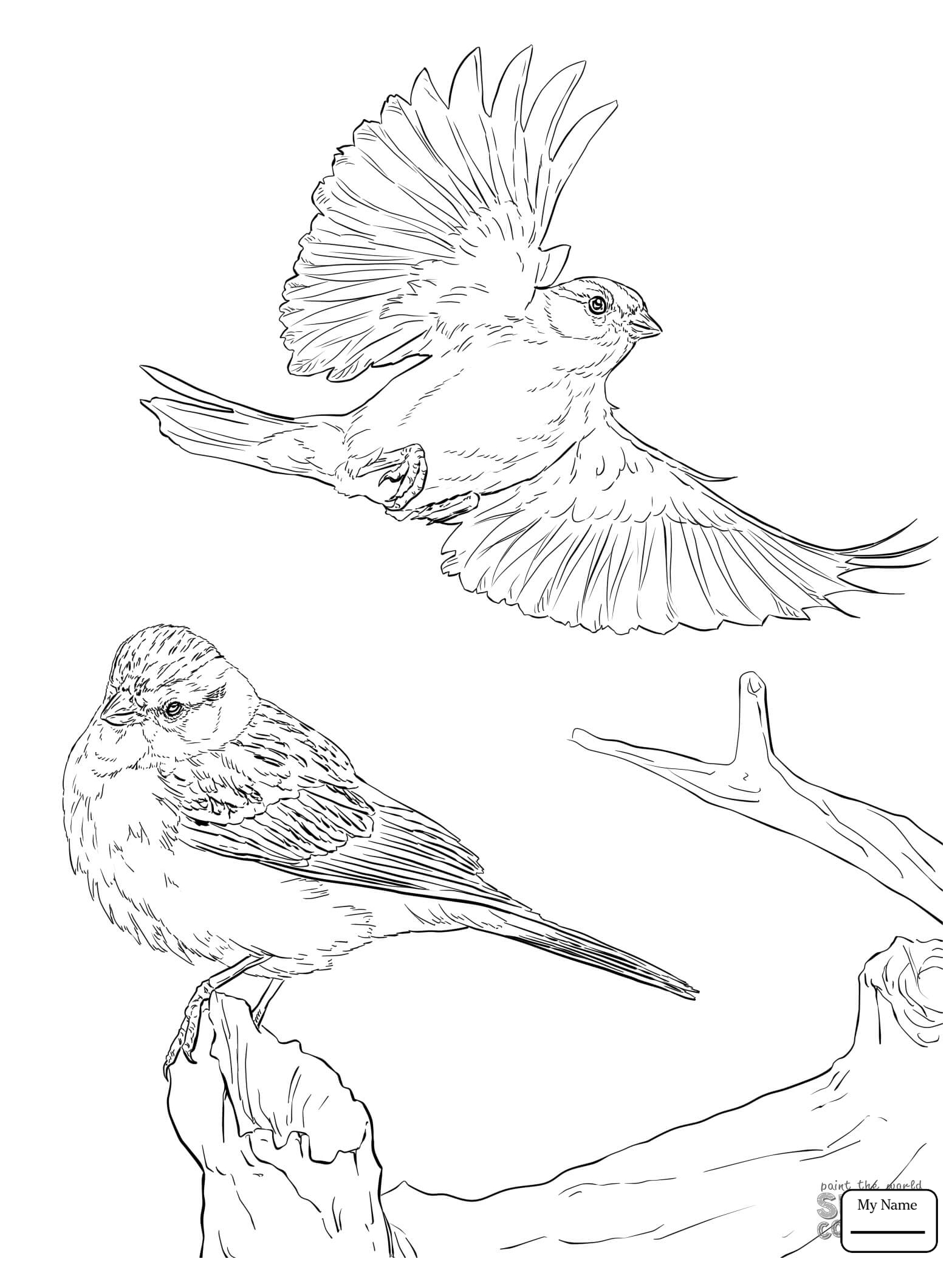 1567x2089 Coloring Pages Birds Flying Sparrow