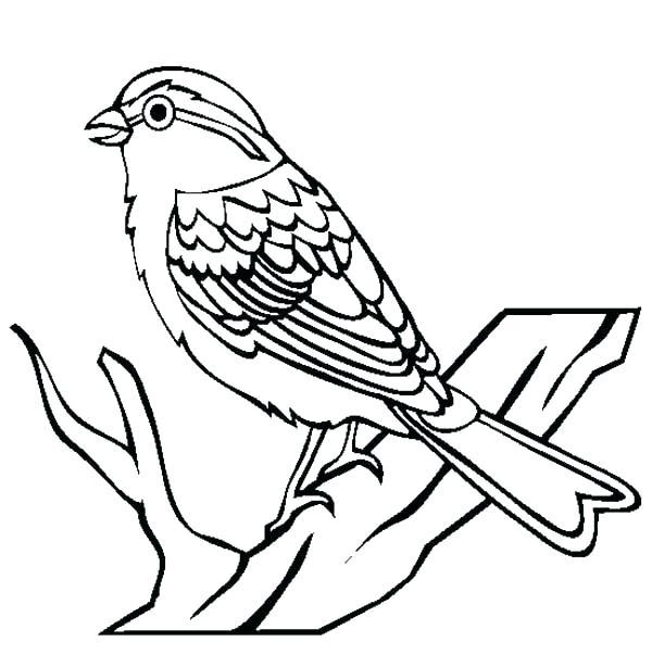 600x614 Coloring Page Of A Bird Coloring Page Of A Bird Cute Bird Sketch