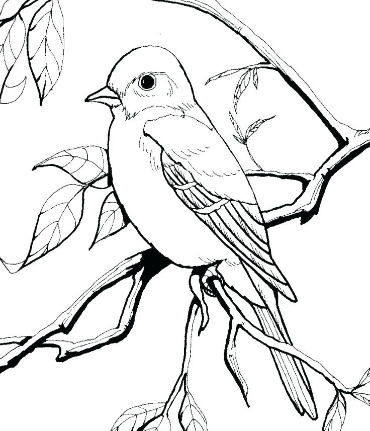 736x857 Coloring Page Of A Bird Coloring Pages Of Birds Coloring Pages
