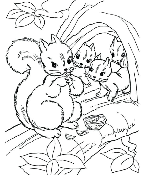 600x734 Coloring Page Of A Squirrel Squirrel Squirrel Eating Nut With Her