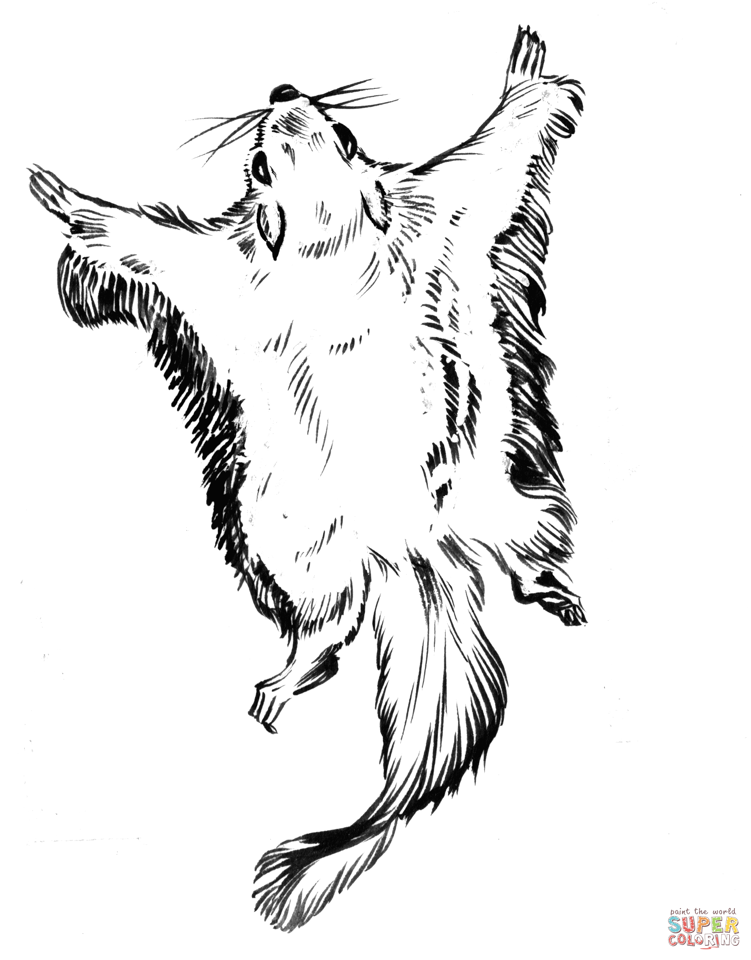 Flying Squirrel Drawing At Getdrawings Free For Personal Use