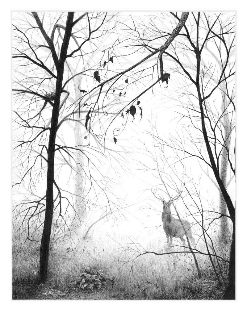 800x1014 November Fog By Mynti