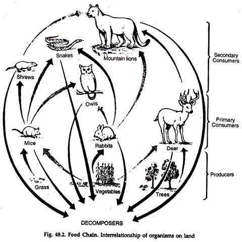 480x480 Food Chains, Food Webs And Trophic Levels Environment