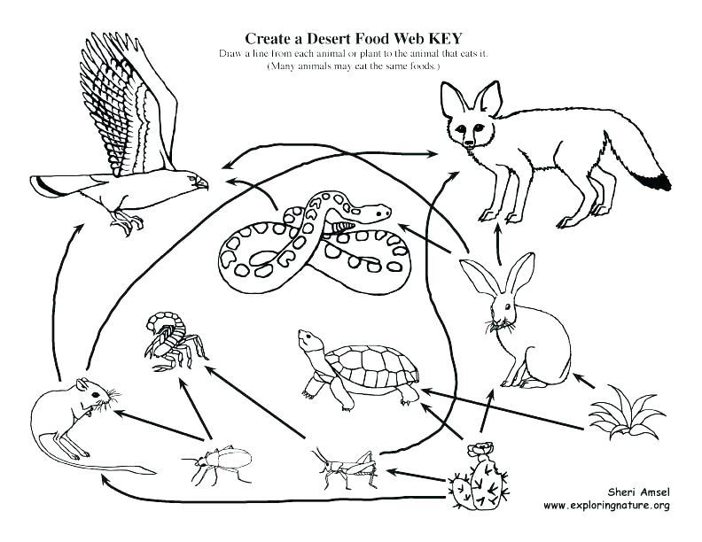 Food Chain Drawing at GetDrawings