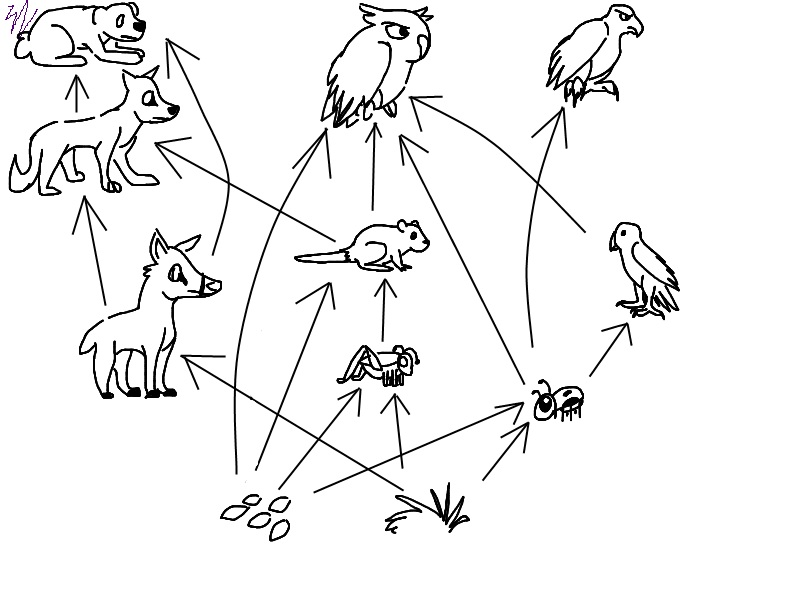 800x600 Food Web By Constintinos