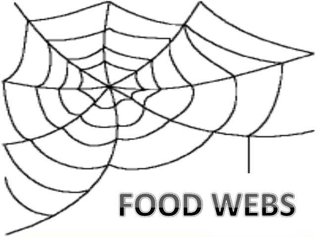 638x479 Food chain,food web and ecological pyramids