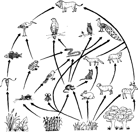475x452 Food Web, Food Web Within An Ecosystem, There Are Many Different