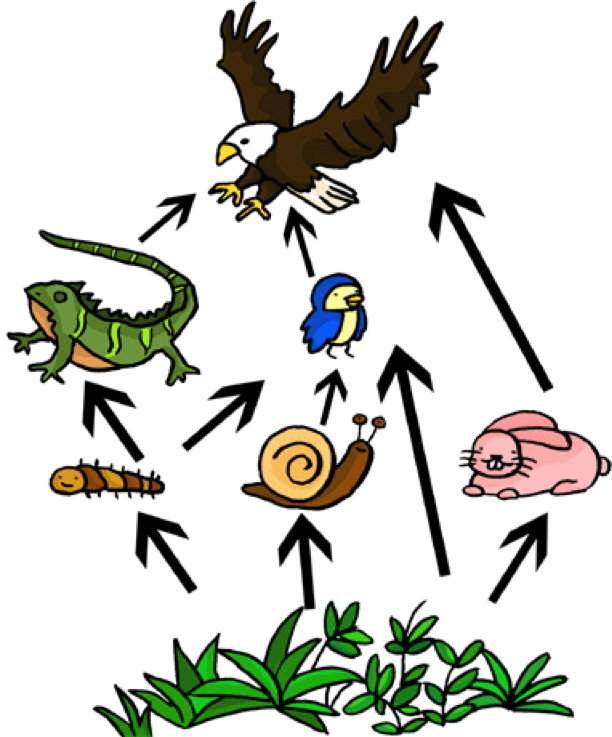 food chain drawing at getdrawings com free for personal use food rh getdrawings com food chain clip art/free food chain clip art/free