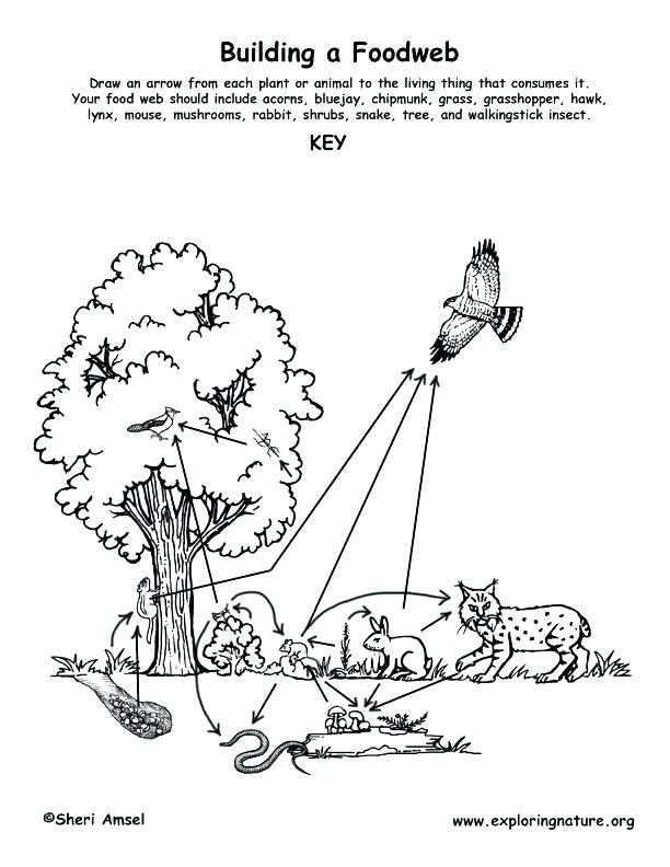 612x792 Animal Habitat Coloring Pages Food Chain Coloring Pages Forest