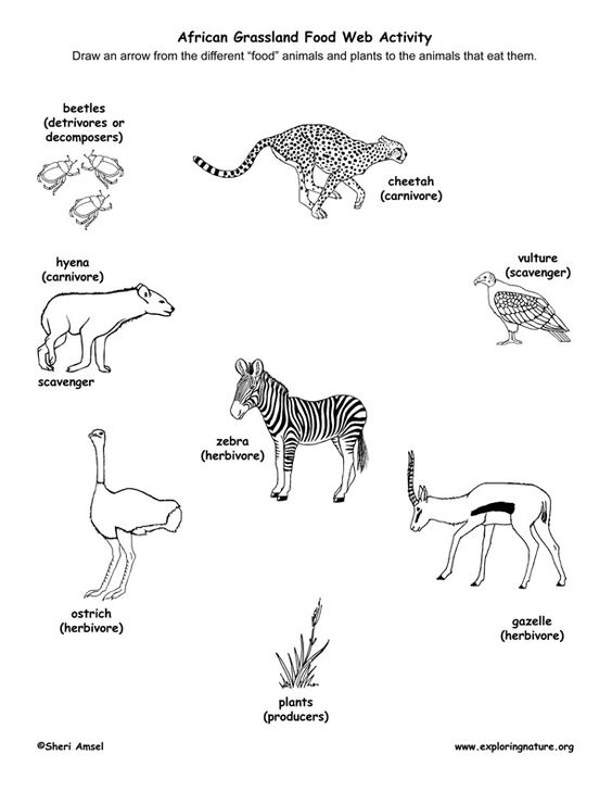 564x729 Learn About Food Webs And African Grasslands From Exploringnature