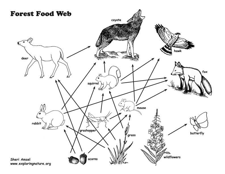 792x612 Williams Wallpaper Food Web And Food Chain