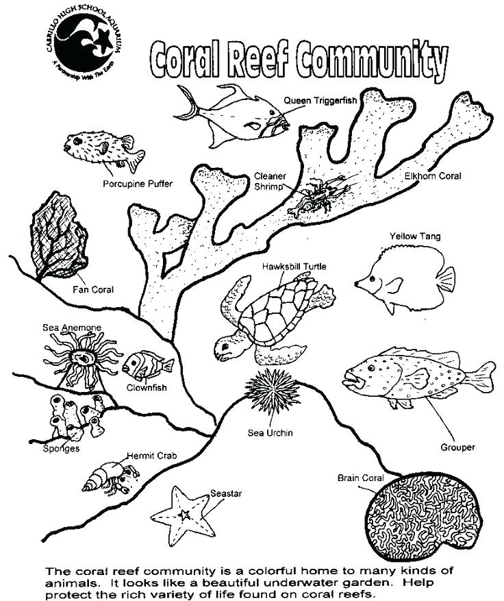 736x877 Food Web Coloring Pages