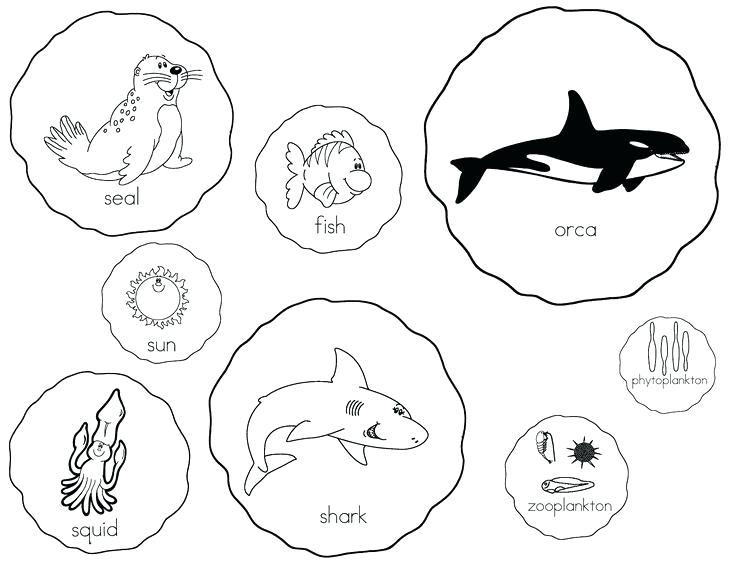736x564 Clipart Of Food Food Web Food Chain Clipart Images Memocards.co