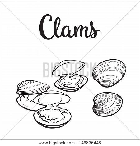 450x470 Clams, Mussels, Seafood, Sketch Vector Amp Photo Bigstock