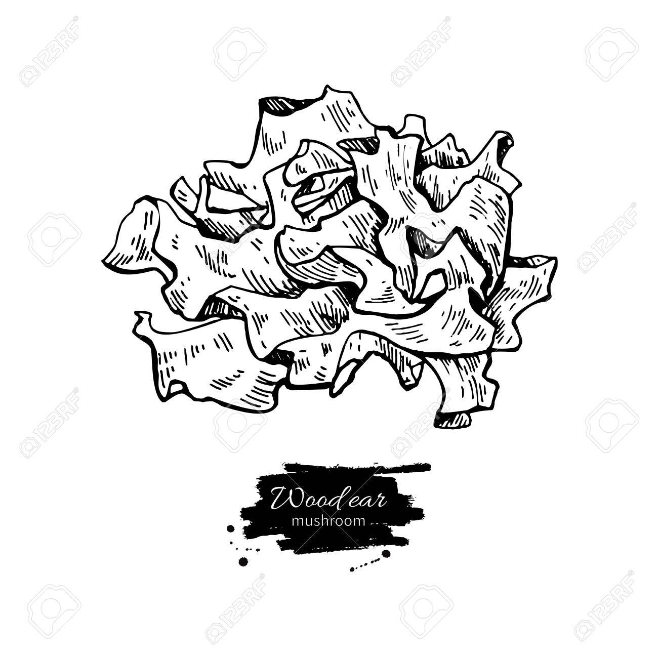 1300x1300 Wood Ear Mushroom Hand Drawn Vector Illustration. Sketch Food