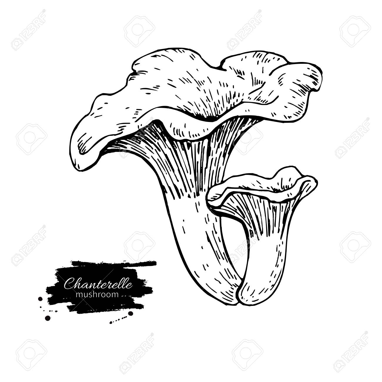 1300x1300 Chanterelle Mushroom Hand Drawn Vector Illustration. Sketch Food