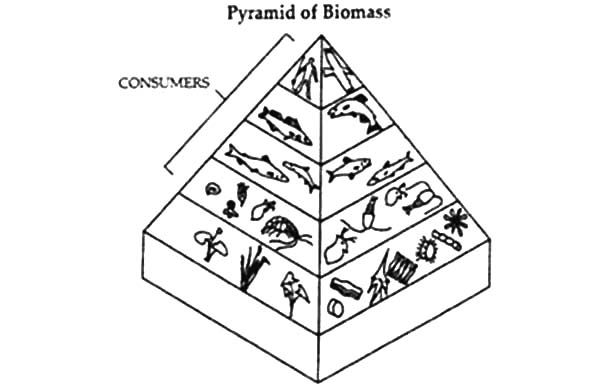 600x388 Food Pyramid Of Biomass Coloring Pages