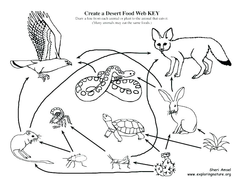 Food web drawing at free for personal for Food web coloring pages