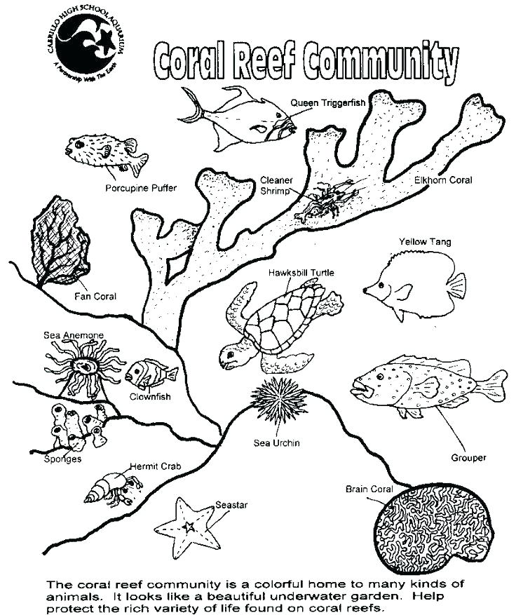 736x877 food web coloring pages food chain coloring page forest floor food