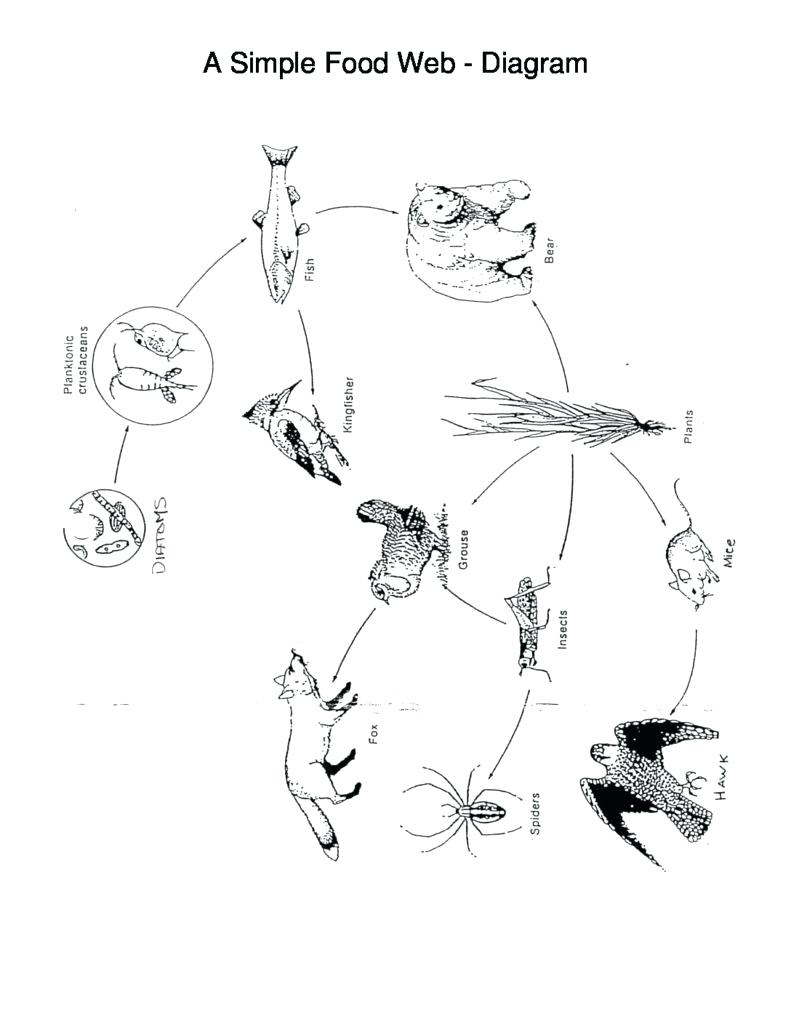 791x1024 Diagram Forest Food Chain Diagram A Simple Web. Forest Food Chain
