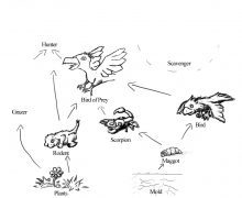 Food Web Drawing at GetDrawings.com | Free for personal use Food Web ...