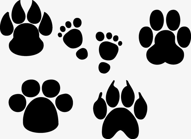 650x474 Animal Foot Print, Animal, Foot Print, Footprint Png And Vector