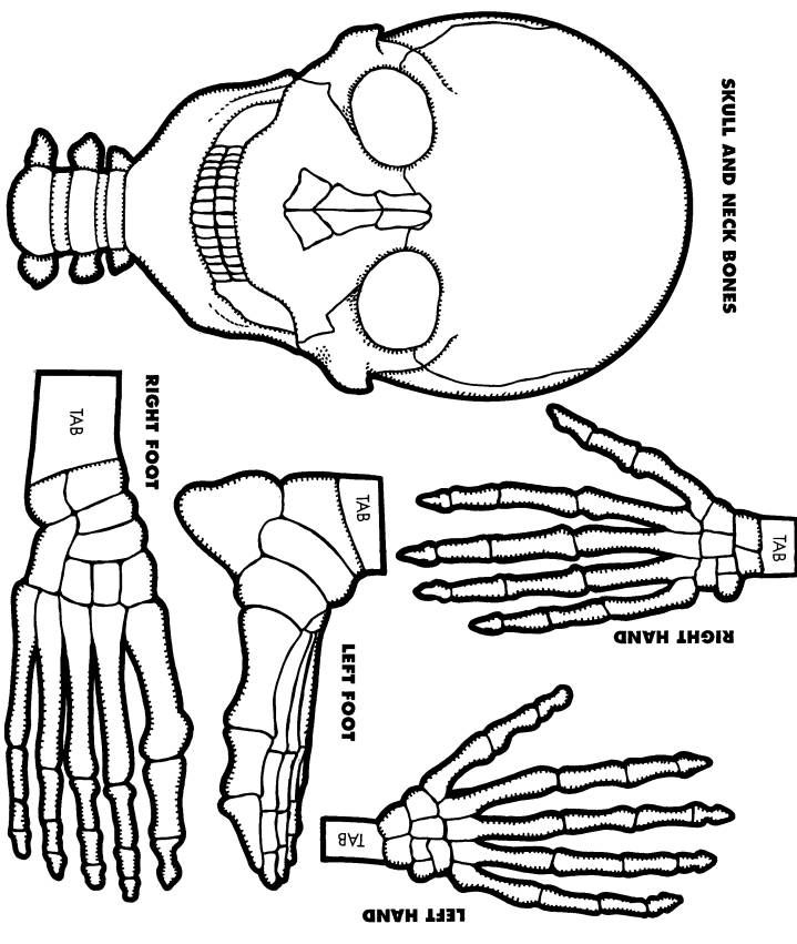 Foot Skeleton Drawing At Getdrawings Free For Personal Use