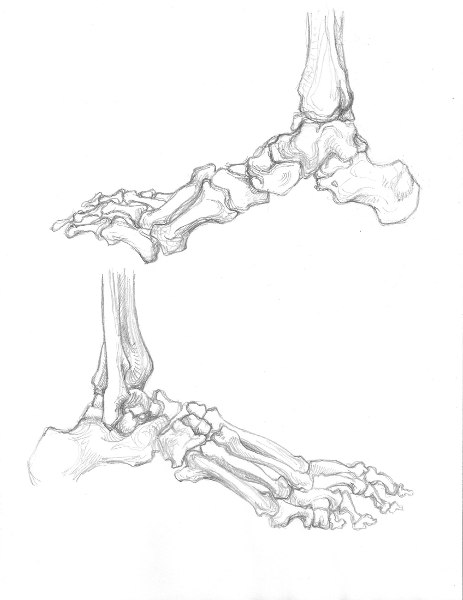 Foot Skeleton Drawing At Getdrawings Com