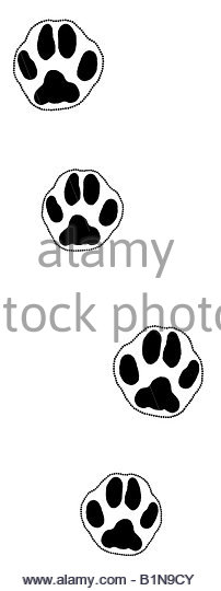 202x540 Animal Feet Black And White Stock Photos Amp Images