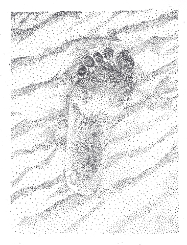 366x479 Day Sixteen Footprint Drawing Thing A Day Forever