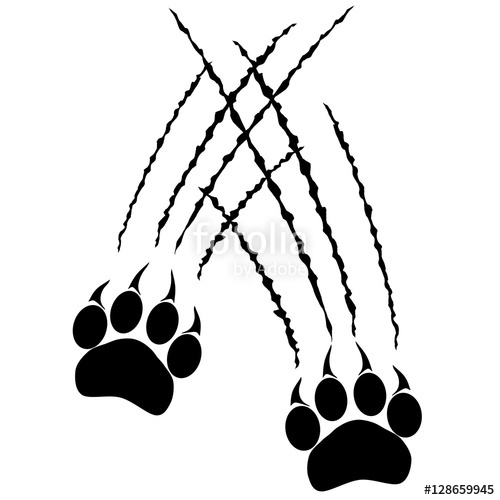 500x500 Footprints Or Steps Of A Big Cat. Panther Or Tiger Traces. Vector