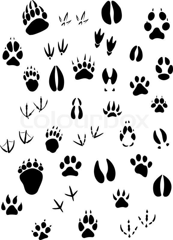 576x800 Big Set Of Animal Footprints Include Mammals And Birds Stock