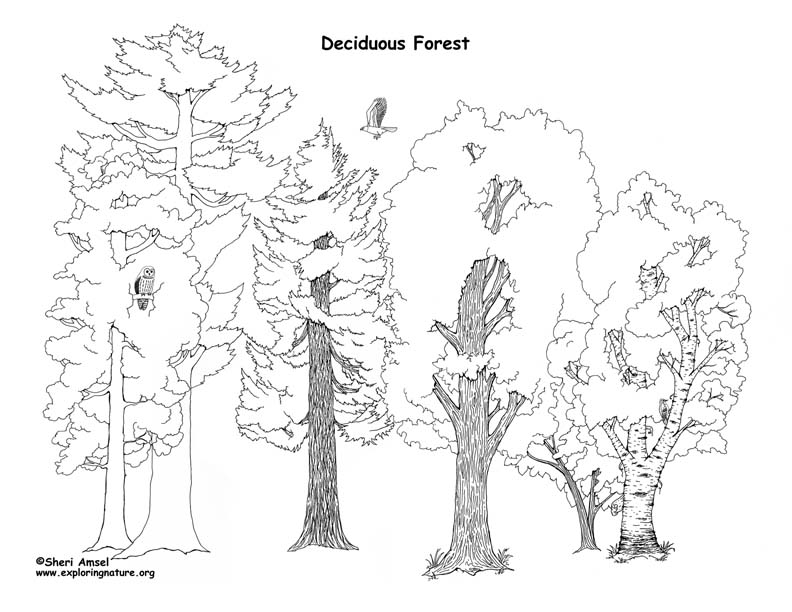 The best free Diorama drawing images  Download from 20 free