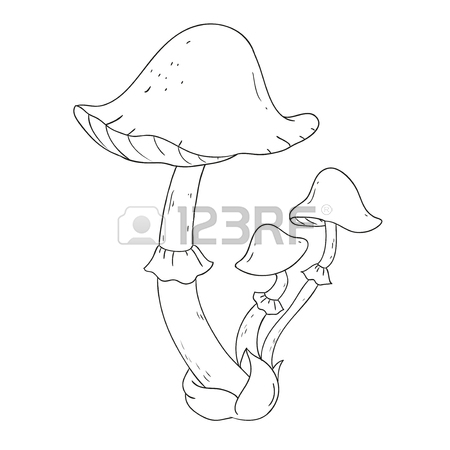 450x450 Forest Mushrooms. Edible Mushroom White. Coloring Book Vector