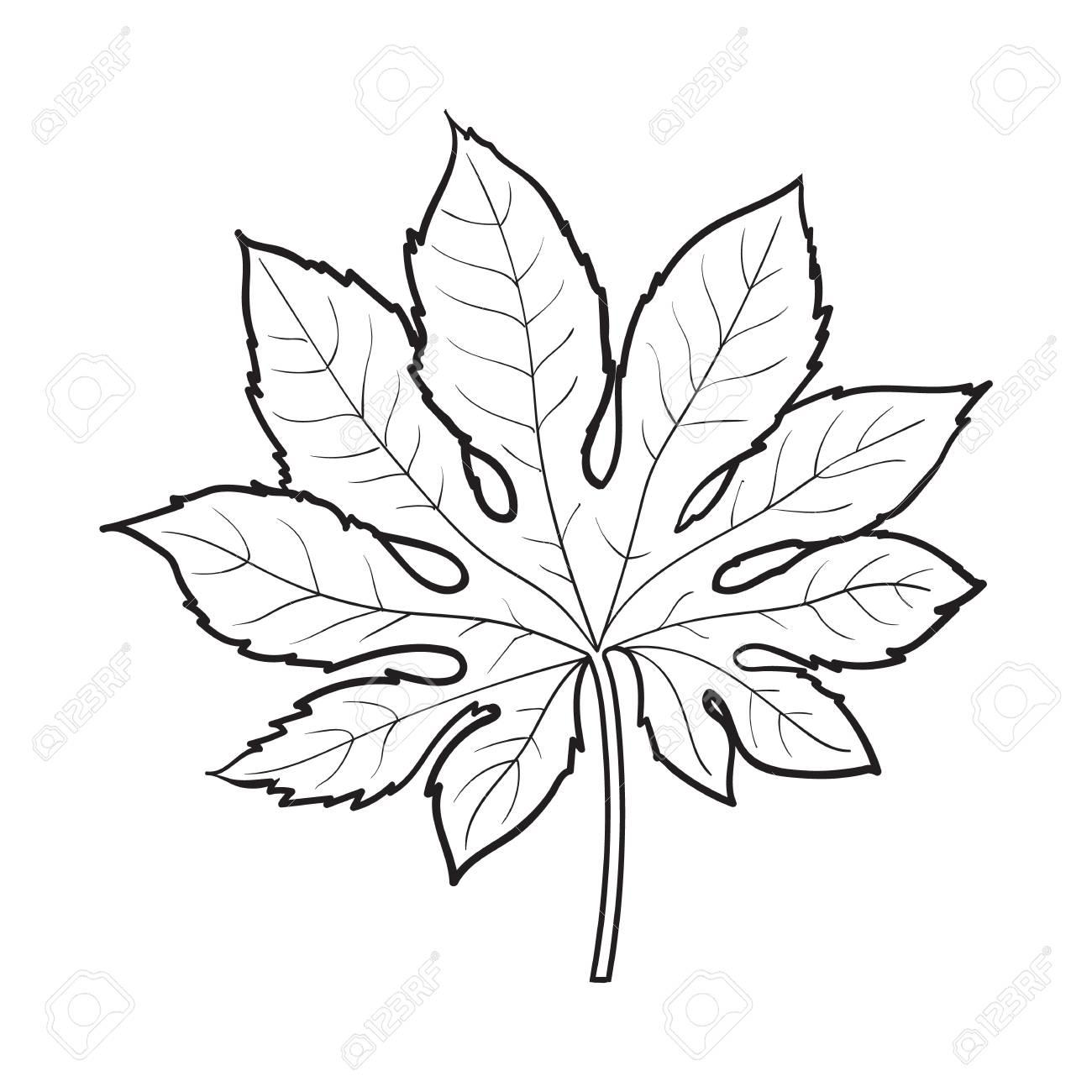1300x1300 Full Fresh Leaf Of Fatsia Japonica Palm Tree, Sketch Style Vector
