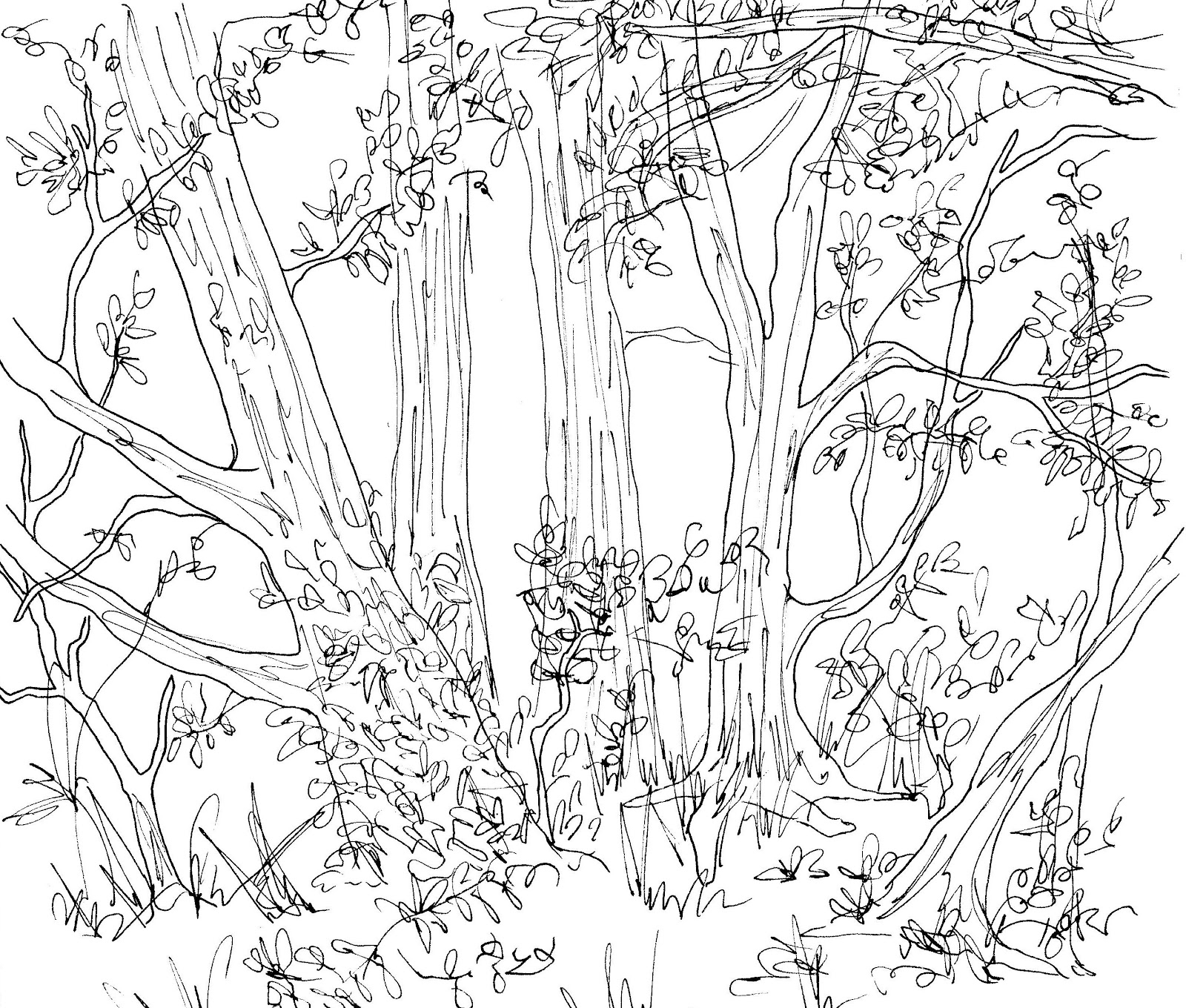 1600x1360 Forest Animals Drawing Arts Forest Wildlife Art Learn Wildlife